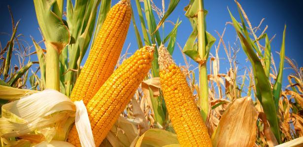 Além da redução de tempo e consumo de energia no processo industrial, a tecnologia permite que, no futuro, sejam adicionados mais nutrientes vitamínicos aos grãos
