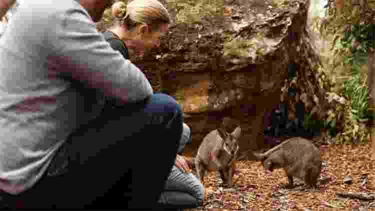 Retiro ecológico tem passeios para o visitante conhecer a fauna do zoológico de Taronga - Divulgação