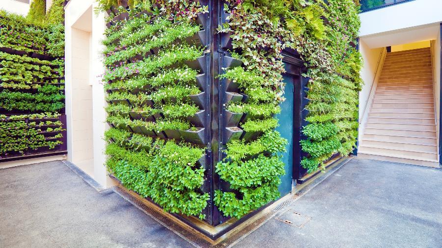 Jardim Vertical pode ser feito em casa, apartamento ou escritório - Getty Images
