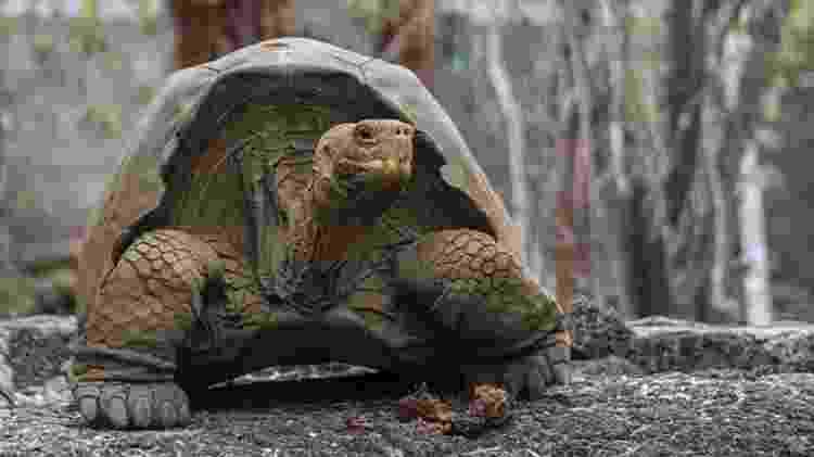 Tartaruga de Galápagos - AFP - AFP