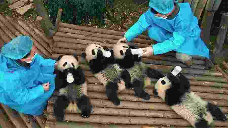 Cena do documentário Pandas - Reprodução