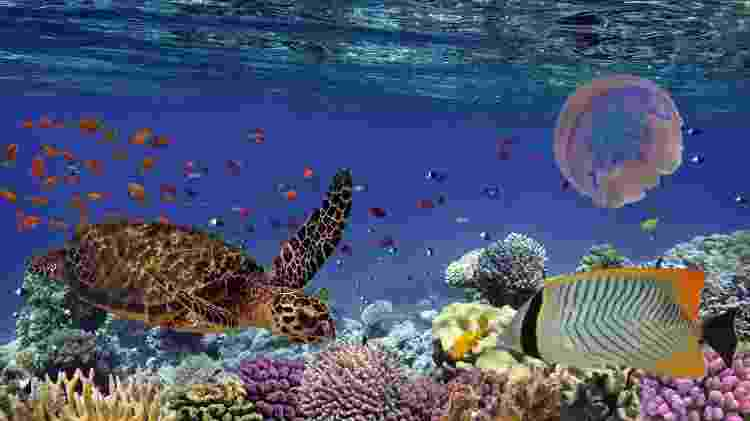 Recife de corais  - Getty images - Getty images