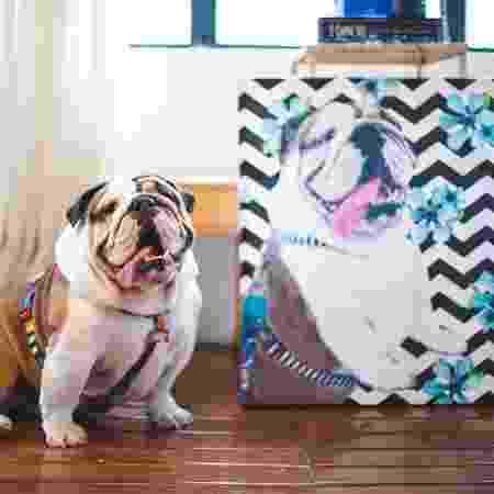 Cachorro Pet Art - Divulgação - Divulgação
