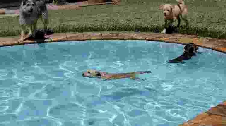 Nos dias quentes, os cães podem brincar na piscina do Mundo Pet Resort sob a supervisão de um cuidador - Evelson de Freitas/ UOL - Evelson de Freitas/ UOL