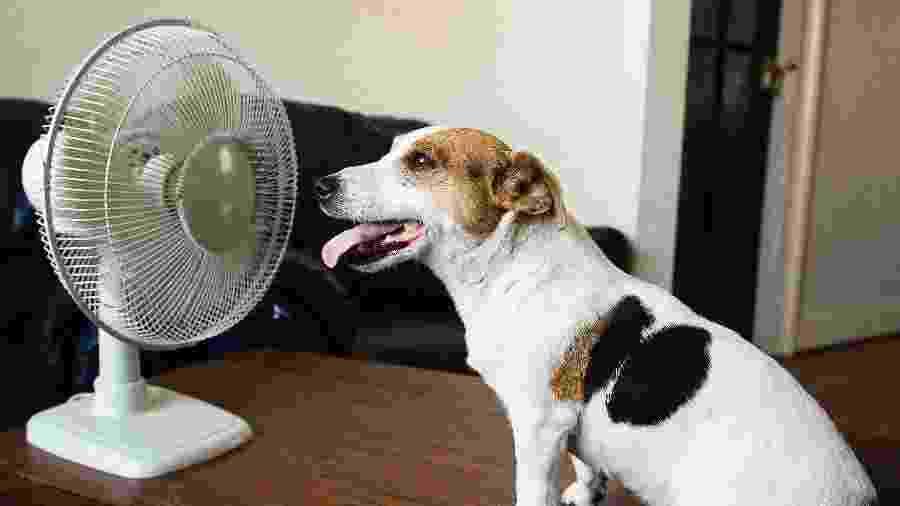 Na época de calor, é preciso trocar a água do animal com mais frequência, várias vezes ao dia - iStock