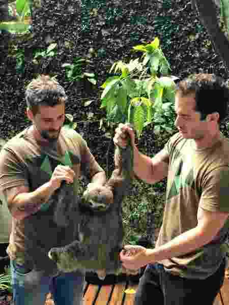 Bruno Gagliasso ajuda a devolver preguiça-de-três-dedos à natureza - Divulgação