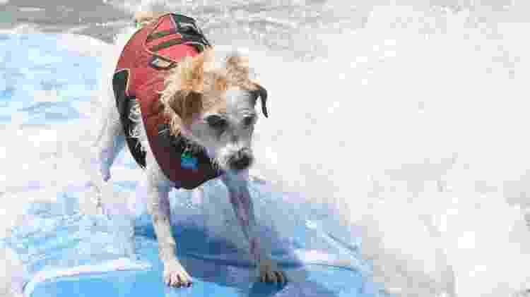 A Califórnia é um dos melhores lugares para observar cãezinhos pegando onda - Divulgação/Visit California
