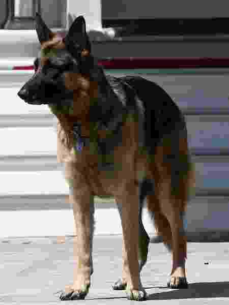 joe biden cão champ - Getty Images - Getty Images