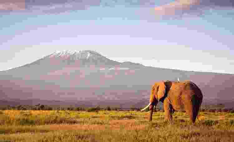 Animais são alvos de caça predatória para obter marfim - Getty Images - Getty Images