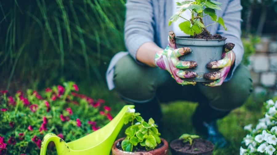Apps como PictureThis e PlantSnap ajudam os jardineiros de primeira viagem - AleksandarNakic/iStock