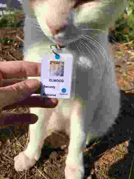 Ele visita o local todos os dias e fica na entrada, tomando sol ou pedindo carinho para os visitantes - Chantel Trollip