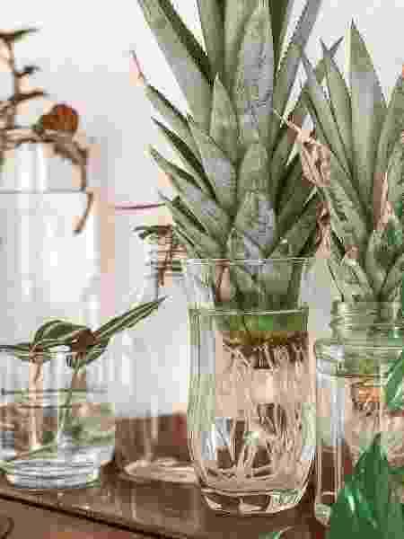 As plantas de Ellen Cortizo - Arquivo pessoal - Arquivo pessoal
