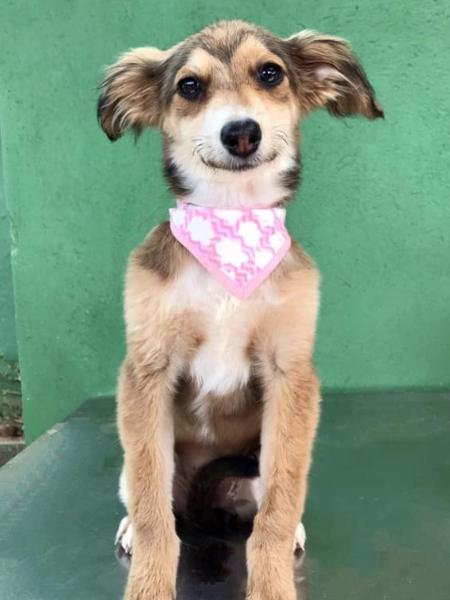 Nomes de vacinas e medidas contra o coronavírus foram dados aos cachoros filhotes para incentivar a adoção - Reprodução/Facebook