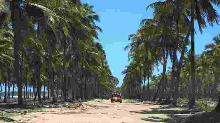Passeio de bugue no Coqueiral de Maracaípe, vizinho a Porto de Galinhas - Eduardo Vessoni - Eduardo Vessoni