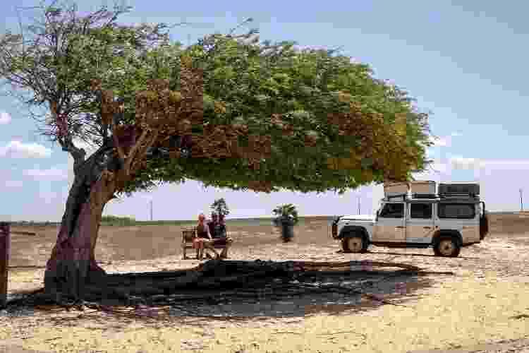 Sob a chamada Árvore Penteada, em Luís Correia, no Piauí - Arquivo pessoal - Arquivo pessoal