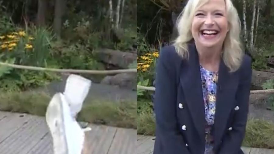 A apresentadora Carol Kirkwood foi derrubada durante a transmissão - Reprodução / BBC / Twitter