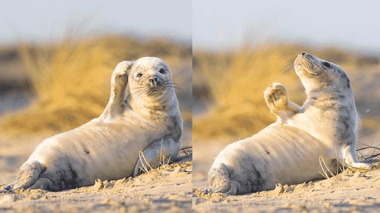 Outras fotos da foquinha que conquistou a internet - Johan Siggeson