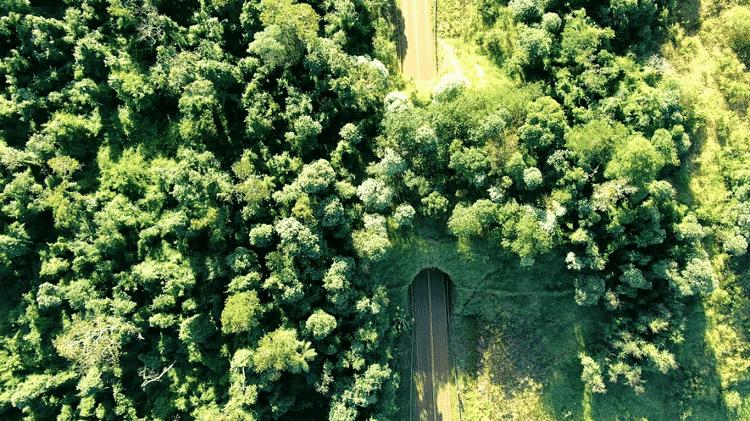 Viaduto vegetado na província de Misiones, Argentina - Diego Varela - Diego Varela