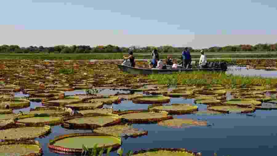 Turistas durante passeio pelo Pantanal antes da pandemia - Divulgação/Governo do Mato Grosso do Sul
