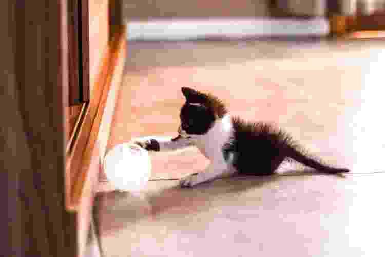 Filhote de gato brincando - Getty Images/iStockphoto - Getty Images/iStockphoto