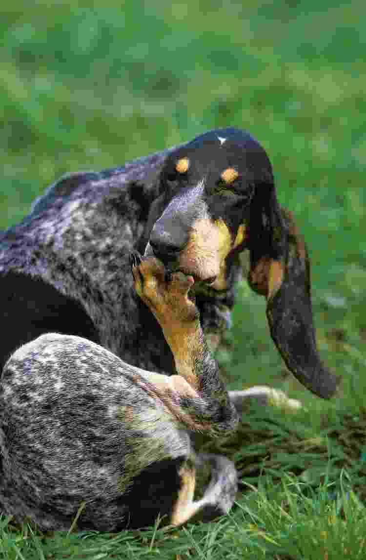 Cão se lambendo - Getty Images/iStockphoto - Getty Images/iStockphoto