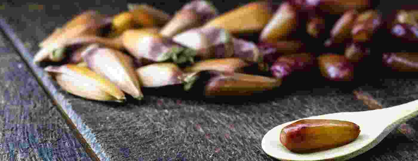 O pinhão é Importante elemento da culinária do Sul e, também, da região de Campos de Jordão, canto paulista na Serra da Mantiqueira - Getty Images/iStockphoto