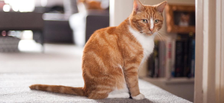 Gato em casa - Getty Images