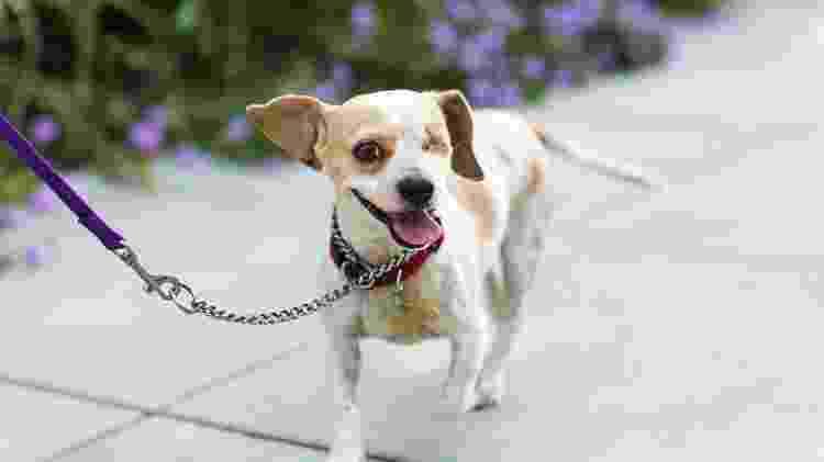Pets com deficiência custam a encontrar pais adotivos - Getty Images - Getty Images