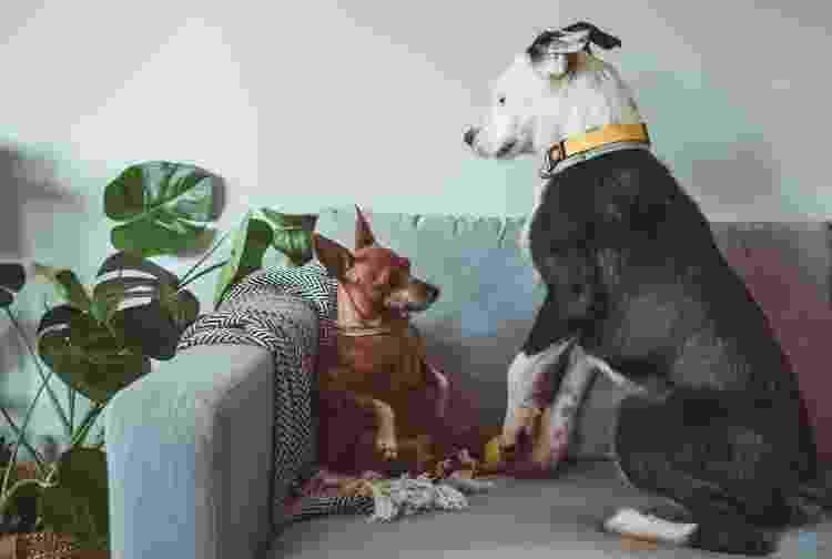 Para quem testou, não basta usar o feromônio para acalmar os pets - Getty Images/iStockphoto - Getty Images/iStockphoto