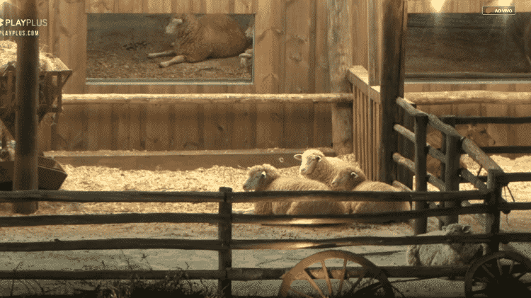 Transmissão exibe animais durante prova - Reprodução/PlayPlus - Reprodução/PlayPlus
