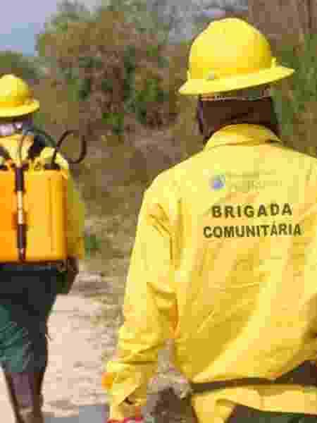 Brigadas voluntários em treinamento contra queimadas no Pantanal - Reprodução/ECOA - Reprodução/ECOA