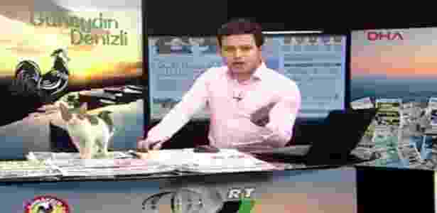 """Gato """"invade"""" o programa de TV turco """"Good Morning Denizli"""" - Reprodução"""