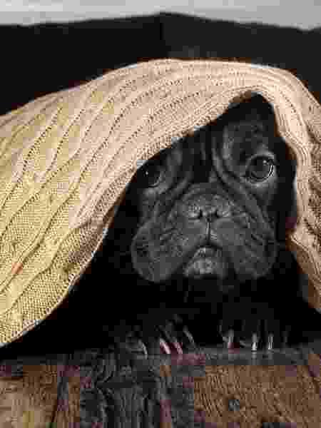 Cachorro com medo dos fogos: dá para evitar - iStock