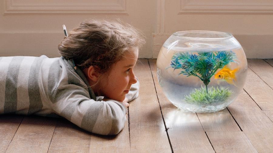 Menina observa peixe em aquário; veja dicas para cuidar e manter um destes em casa - Getty Images