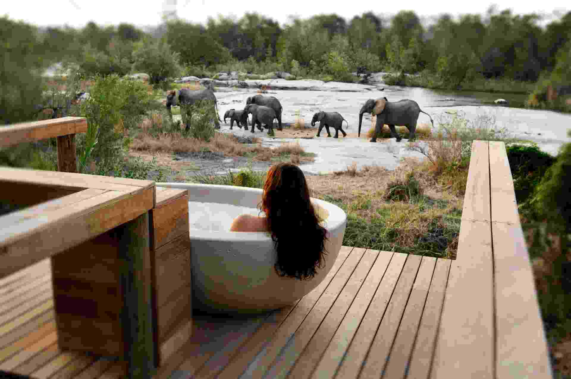 Londolozi Game Reserve, na África do Sul - Divulgação/Londolozi Game Reserve