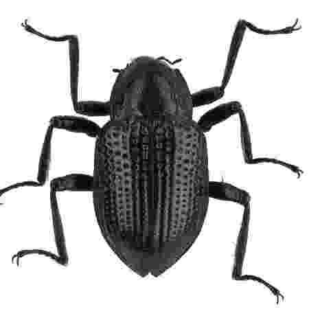 Escaravelho - Divulgação - Divulgação