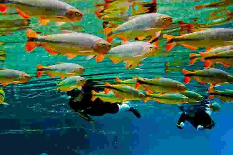 Flutuação no Rio da Prata, uma das principais atrações de Bonito - Daniel de Granville/Grupo Rio da Prata - Daniel de Granville/Grupo Rio da Prata