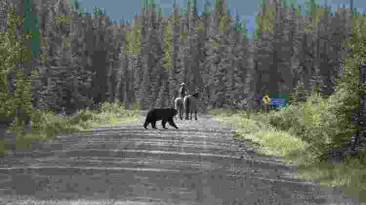 Filipe sendo perseguido por um urso em Alberta, província do Canadá - Arquivo pessoal - Arquivo pessoal