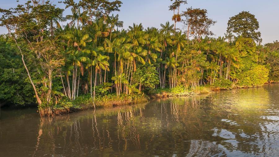 """Ambientalistas dizem que o programa, lançado este ano pelo governo do presidente Jair Bolsonaro, equivale a """"greenwashing"""", ou uma ação de maquiagem para melhorar a imagem do governo na área ambiental, em um momento em que o desmatamento está aumentando - Brasil2/Getty Images/iStockphoto"""