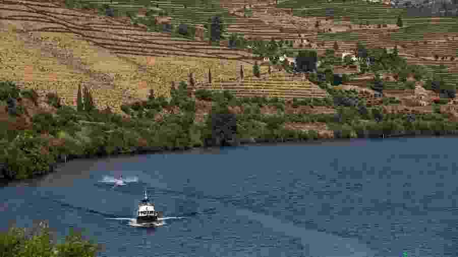 Associação de Turismo do Porto e Norte