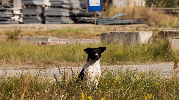 Cachorro passeia por uma das paisagens de Chernobyl  - Reprodução/Airbnb