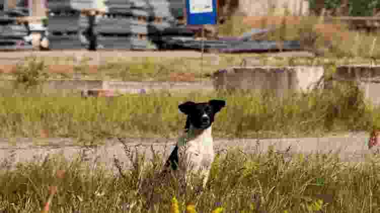 Cachorro passeia por uma das paisagens de Chernobyl  - Reprodução/Airbnb - Reprodução/Airbnb