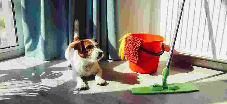 É recomendável buscar produtos que sejam específicos para limpar a casa onde vivem pets ou estar de olho nos rótulos - Getty Images/iStockphoto