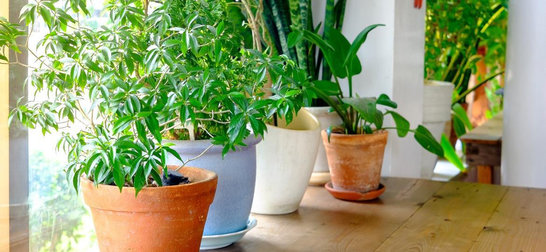 Plantas na janela, Getty - Getty Images