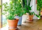 Jardinagem: coloque os vasos para dentro e mais dicas para dias frios - Getty Images