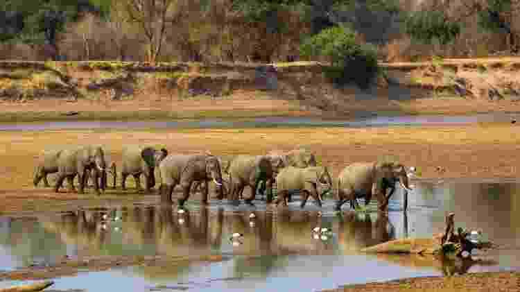 Manada de elefantes na Zâmbia - iStock