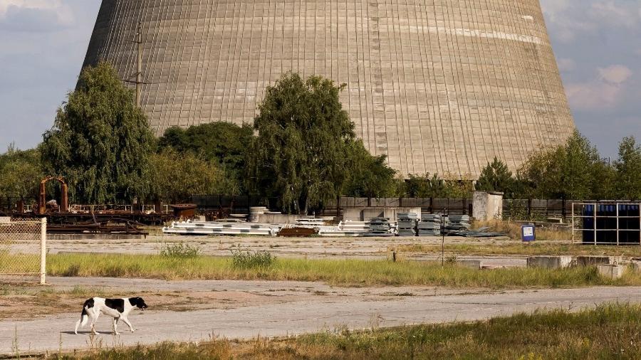 Cachorro passeia por uma das paisagens mais comuns de Chernobyl  - Reprodução/Airbnb