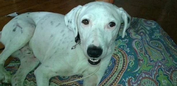O cão Fred tinha medo de sair de casa e se comportava mal durante os passeios - María José/ Arquivo Pessoal