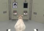 Ovelhas reconhecem rostos de celebridades em pesquisa - BBC