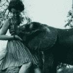 Daphne Sheldrick - Reprodução/Twitter